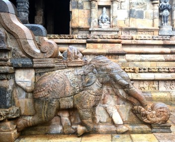 Elephant pulling the Chariot